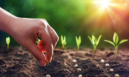 Sow the Seeds Where You Are