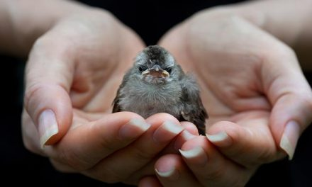 The Sparrow's Rescue
